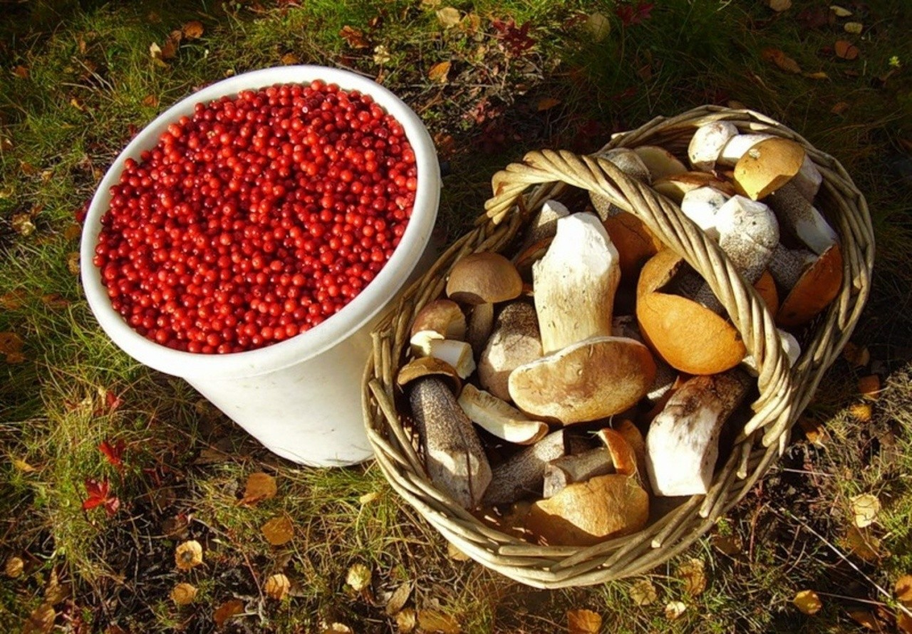 Население может остаться без грибов и ягод: новое предложение Минсельхоза РФ