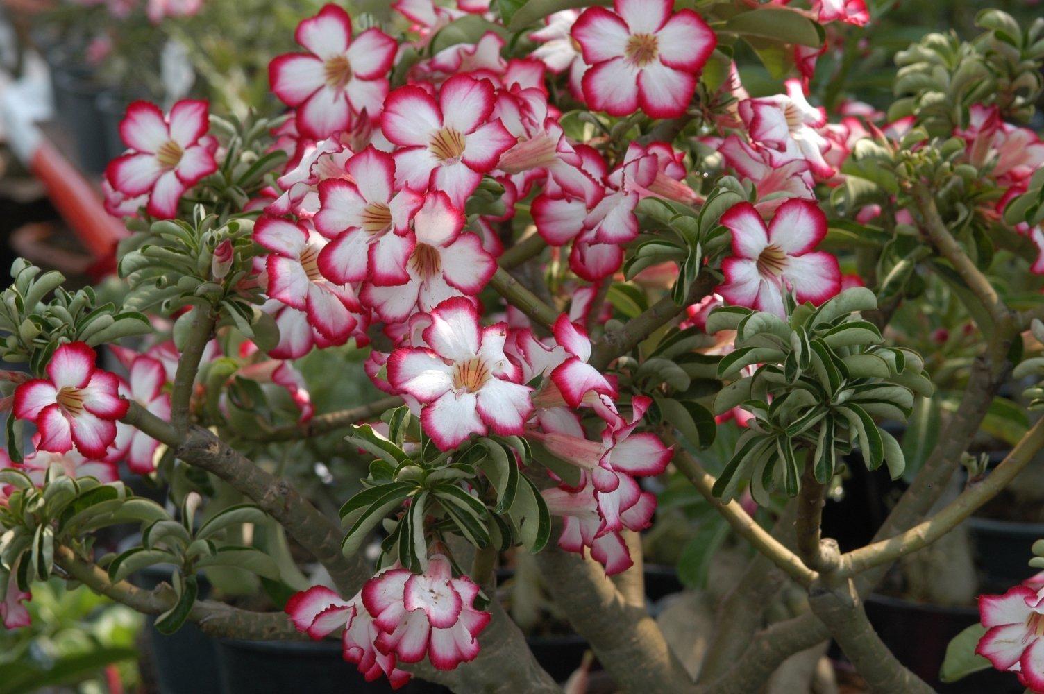 10 растений, которые лучше не держать дома
